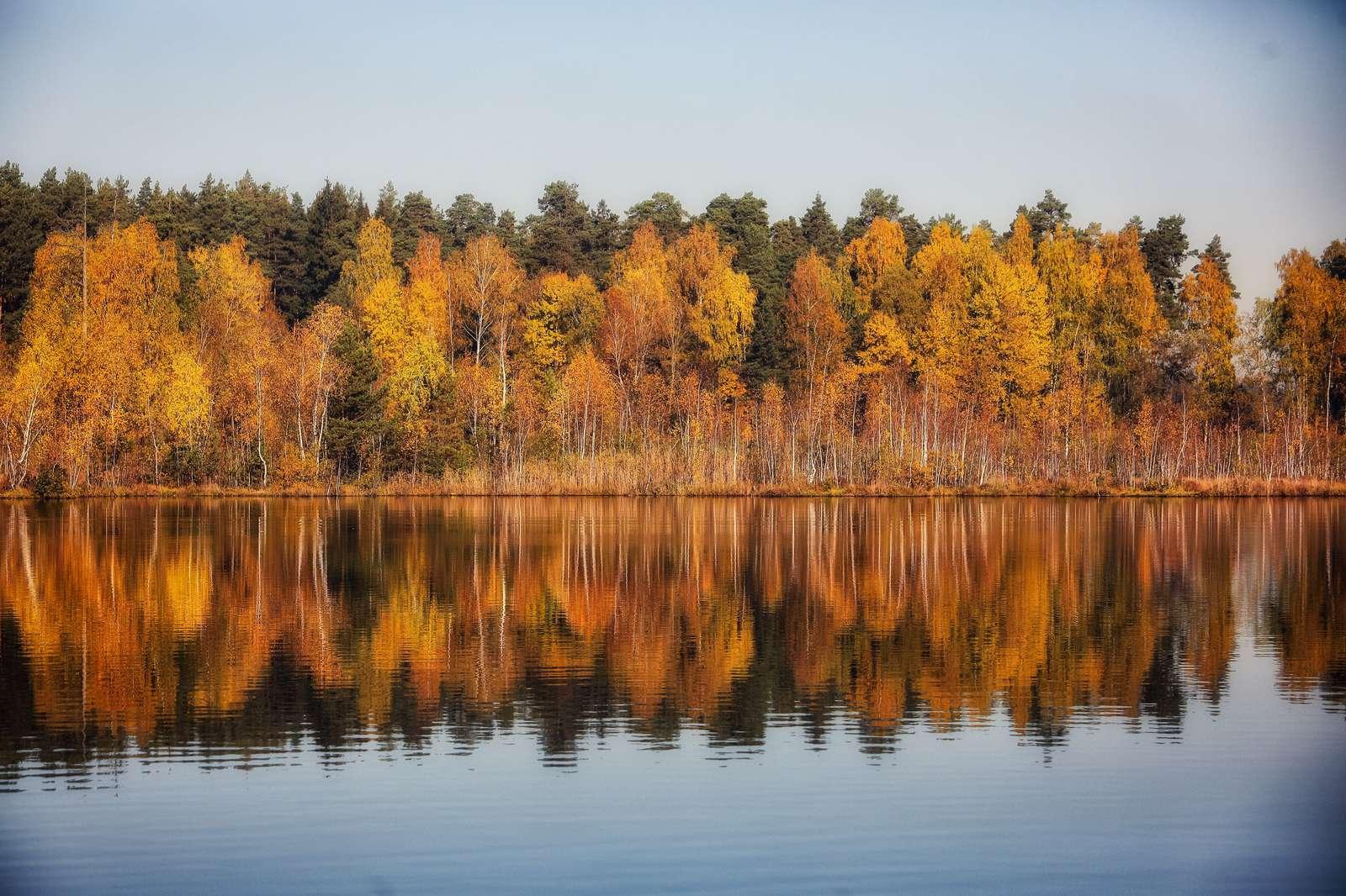Благоустройство озера Бабошкино начнется осенью в Балашихе | Изображение 2