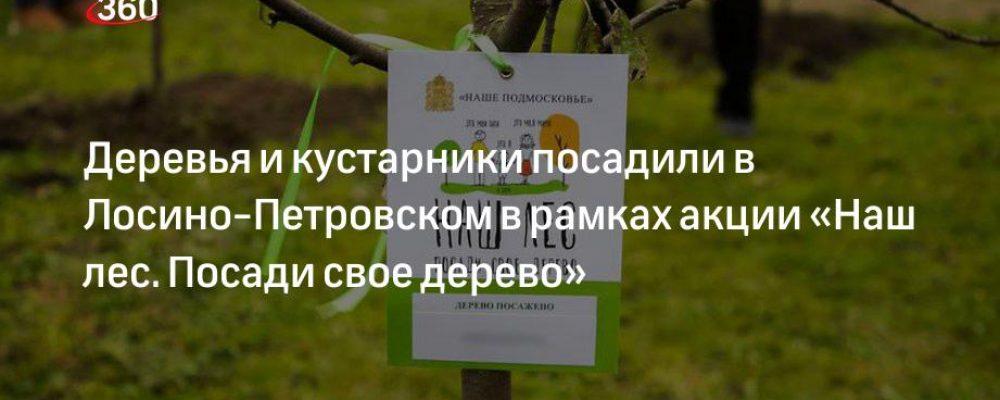 Деревья и кустарники посадили в Лосино-Петровском в рамках акции «Наш лес. Посади свое дерево»