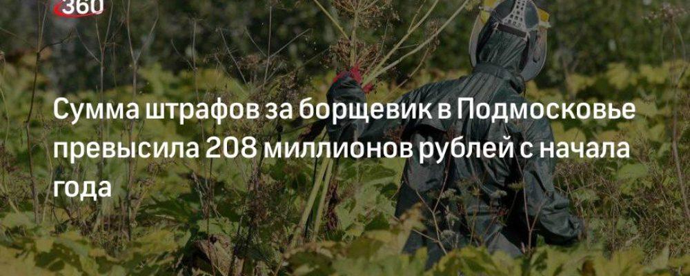 Сумма штрафов за борщевик в Подмосковье превысила 208 миллионов рублей с начала года