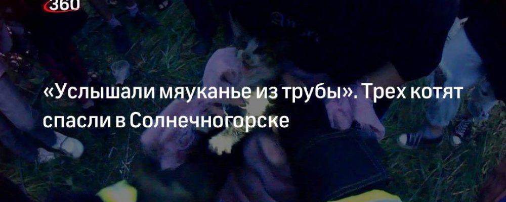«Услышали мяуканье из трубы». Трех котят спасли в Солнечногорске