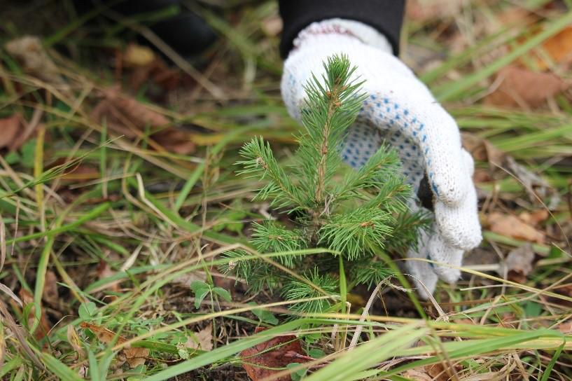 «Главное, чтобы жители оценивали». Акция «Наш Лес. Посади свое дерево» стартовала в Подмосковье