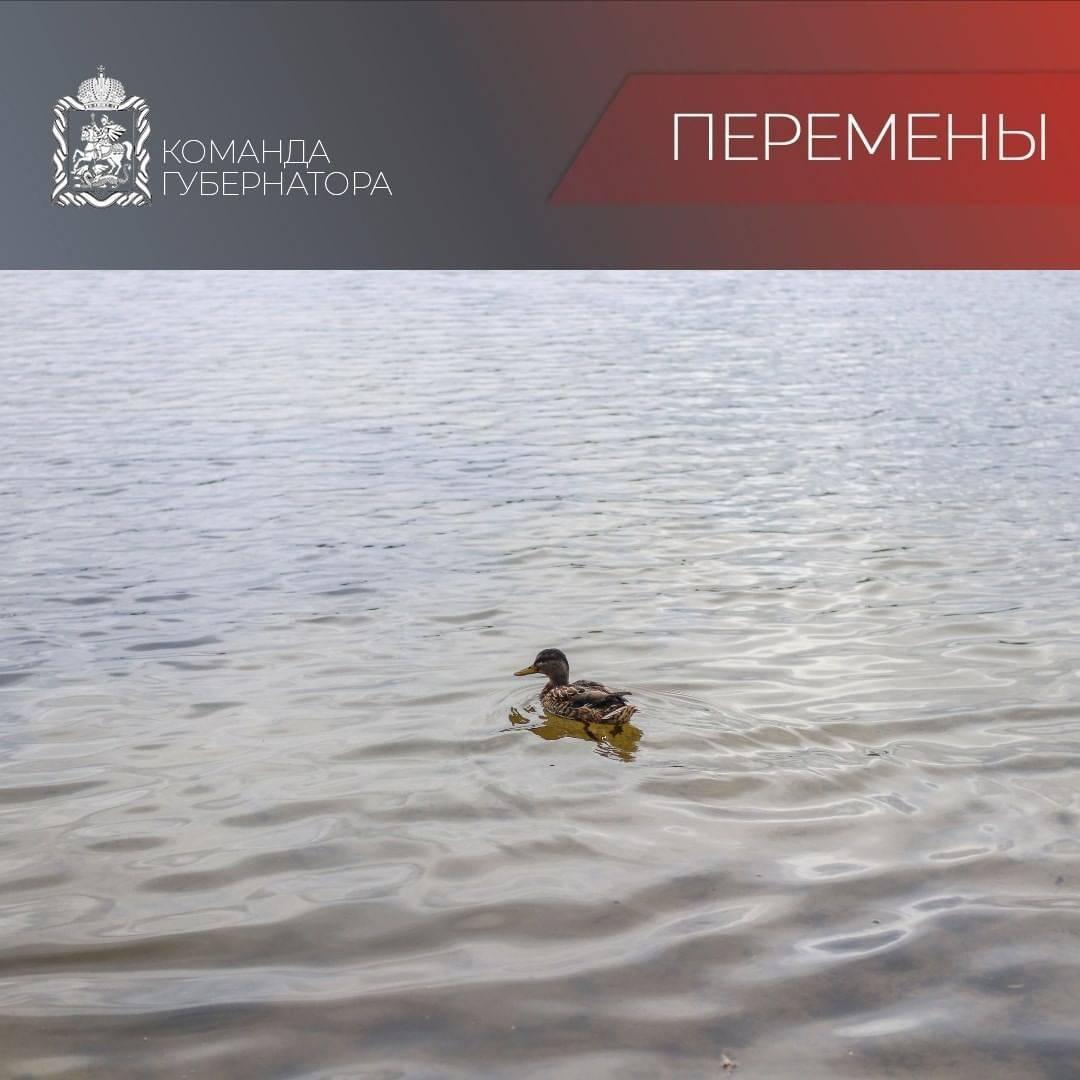 Озеро Большое благоустроят во Фрязине